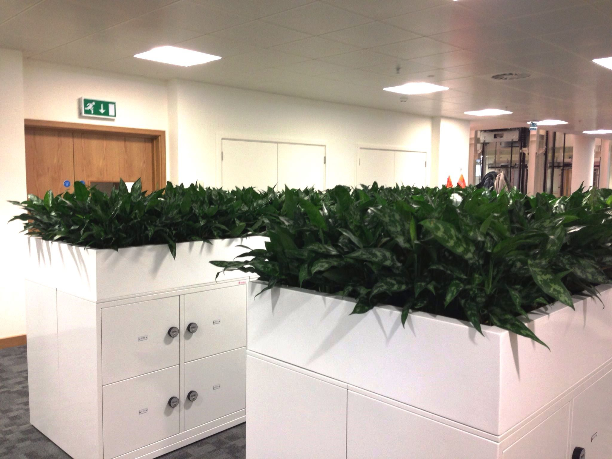 Plants Can Even Make Filing Less Dull