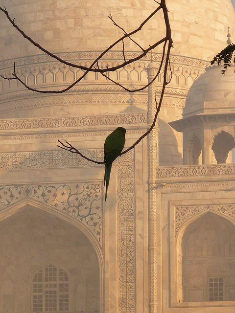 Even Parrots Appreciate the Taj