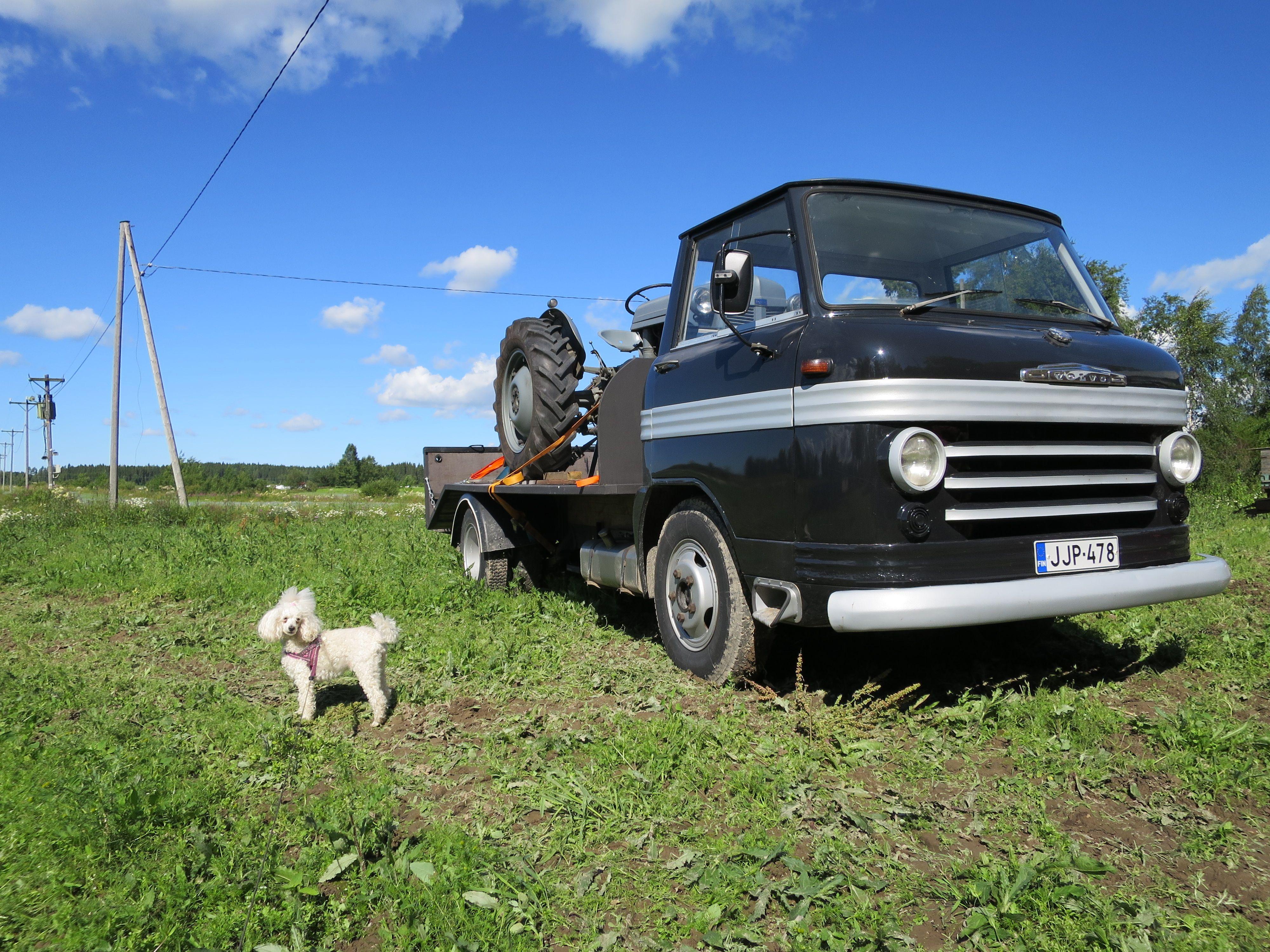 Heinäkuu 2015 ja  ihana villakoira Lyyti Emmi Serafiia ja kaksi muutakin tärkeää juttua eli miehen projektia Volvo Pulla (uusin hankinta 2015) ja Harmaa Fergusson ( ensimmäinen hankinta v.1997)