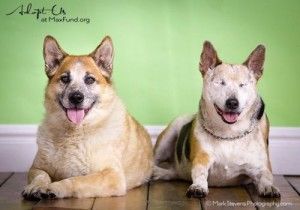Chico And His Best Friend And Seeing Eye Dog Jack Need A New Home Blind Dog Dogs Pet Adoption Center