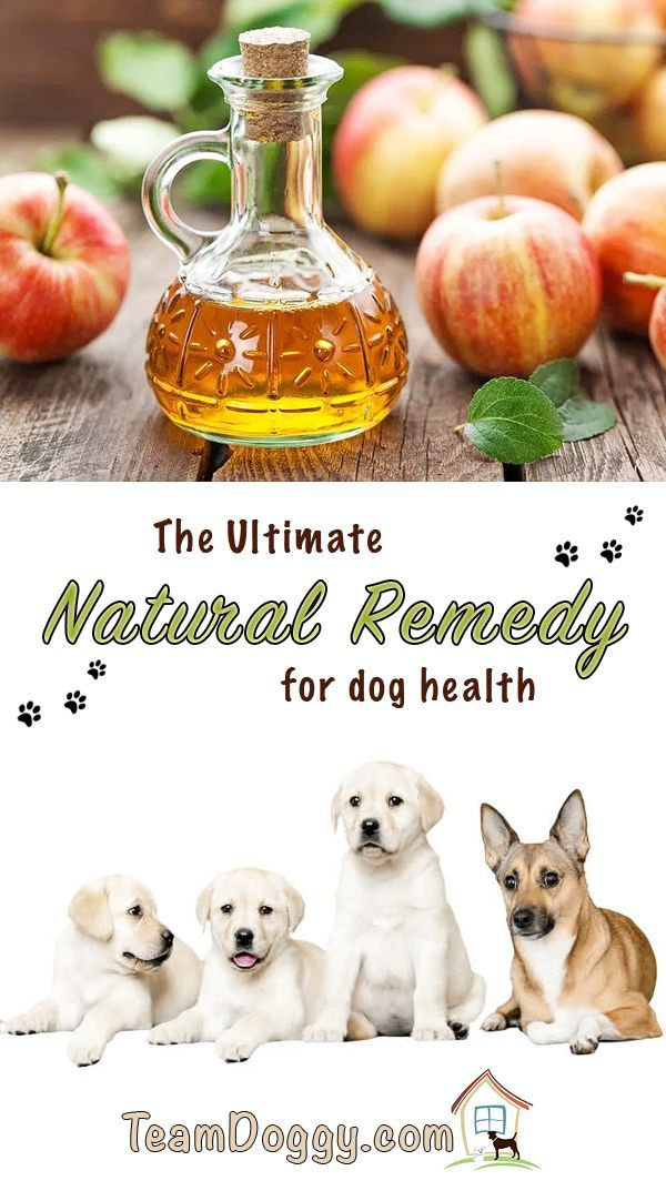 Using apple cider vinegar for dogs is a natural way to