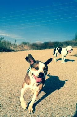 Kelsey Christiason Is Among The Pet Sitters Who Provide Dog