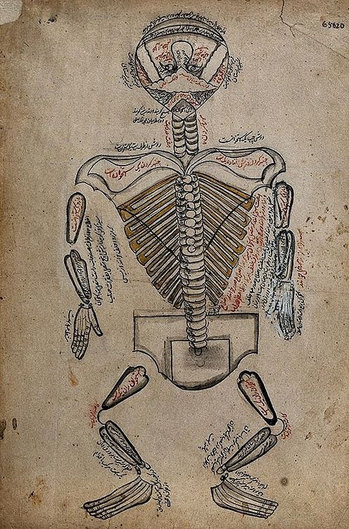 Anatomical Illustration Showing Nerves Of The Human Body Iran 19th