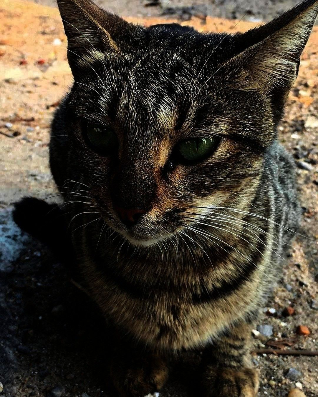 Informations About Catgreeneyecreaturepuresoultigergreenstreetcatphotographystillshotcinematikpicturecolours Pin You can easily use my profile to examine different pin ty...