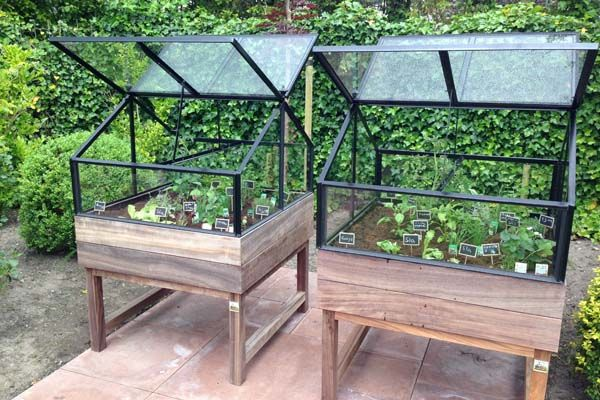Les Potagers The Thomas® Iron Tabletop Greenhouse $650.00