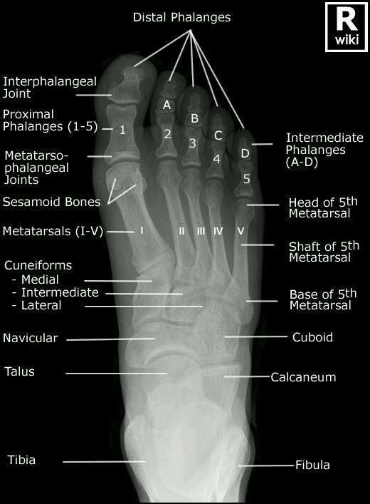 Pin By Carol Darnell On Medical Pinterest Radiology Rad Tech