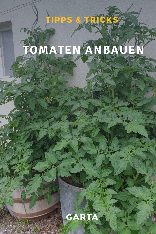 Tomaten Anbauen Im Topf In 2020 Tomaten Anbauen Pflanzen Garten