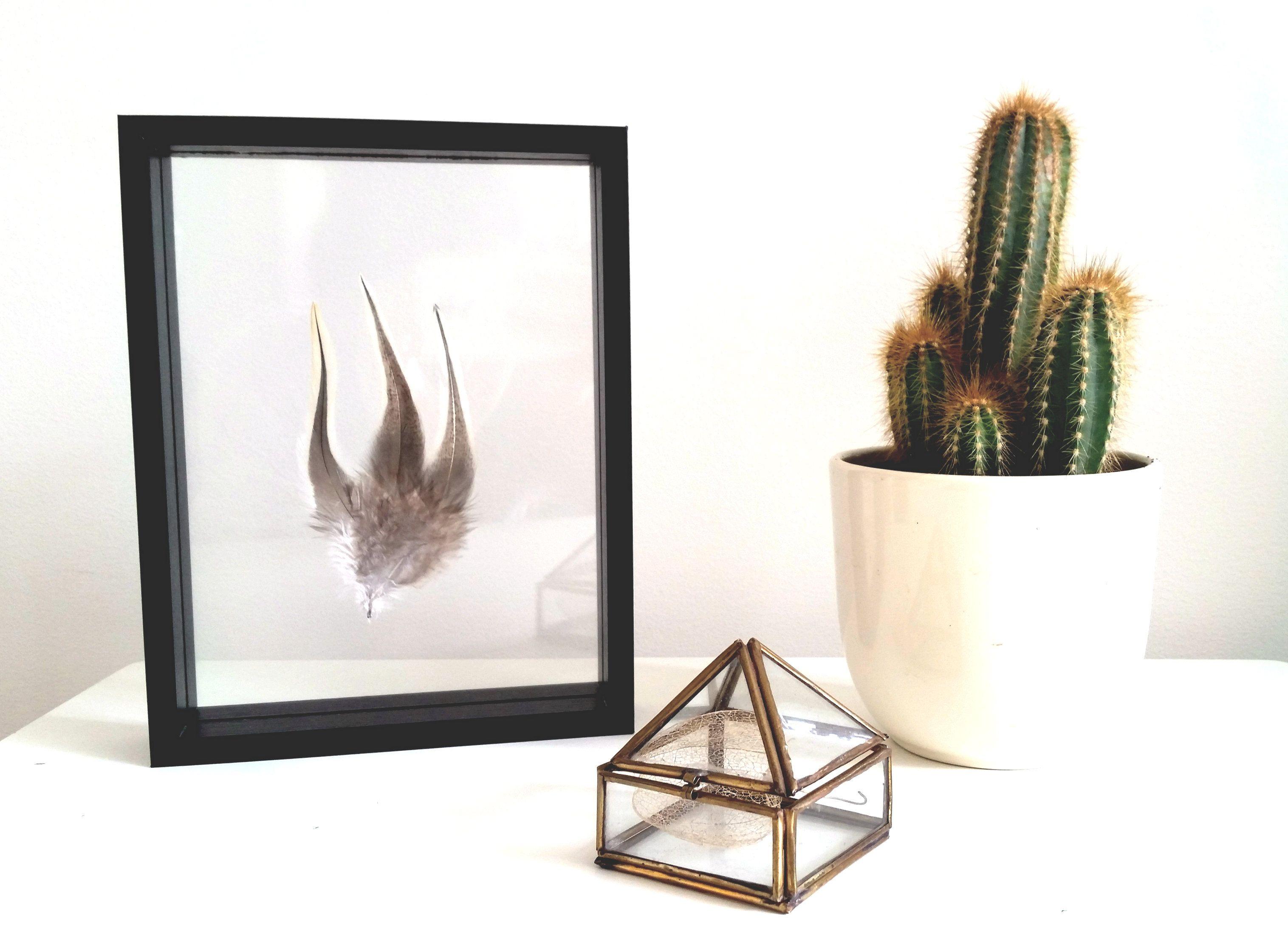 Three-in-one Badger Rooster feathers in a black floating frame ------ Drie-in-een Badger Hanenveren in zwarte zwevende lijst