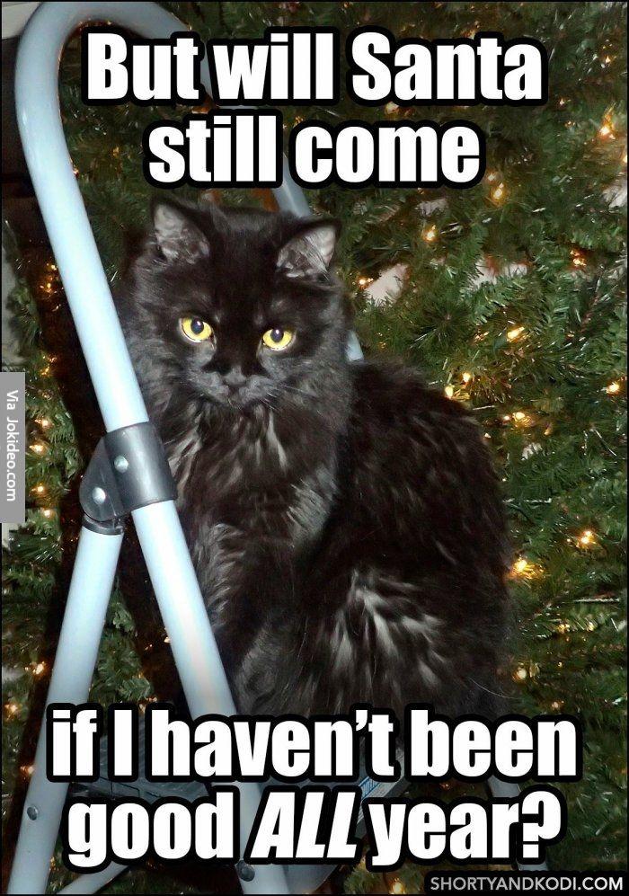 Will santa still come cat christmas meme http//www