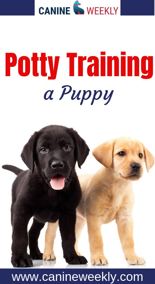 Toilet Training A Puppy Puppy Training Puppy Training Classes Puppy Toilet Training