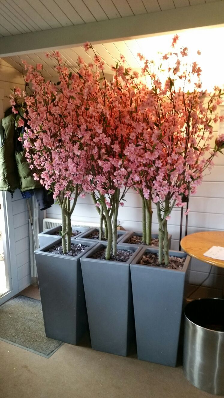 Artificial Pink Blossom Trees Set By Us In Silver Tapered Planters