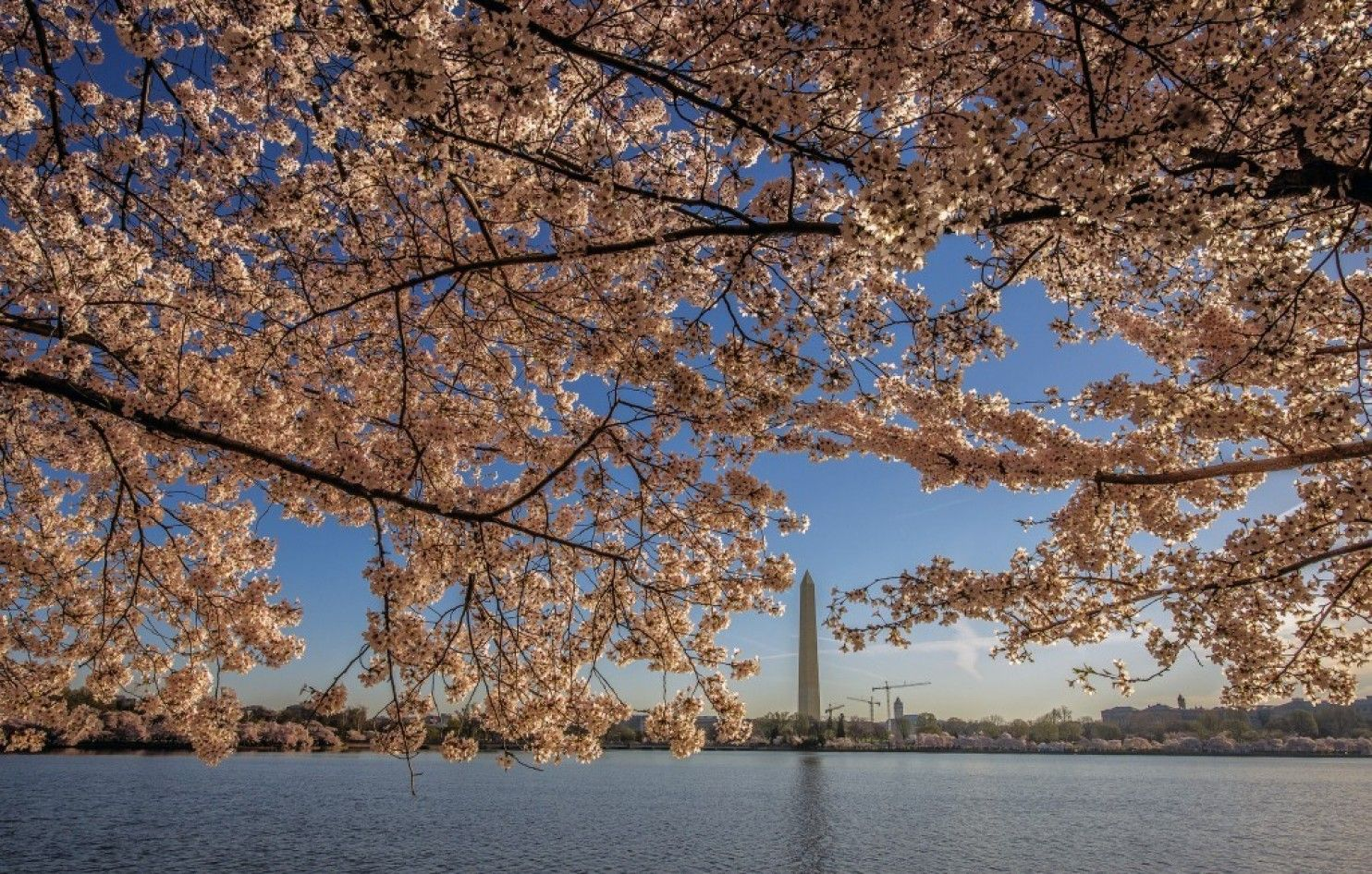 Cherry blossom peak bloom delayed because of cold snap, Park Service says - The Washington Post