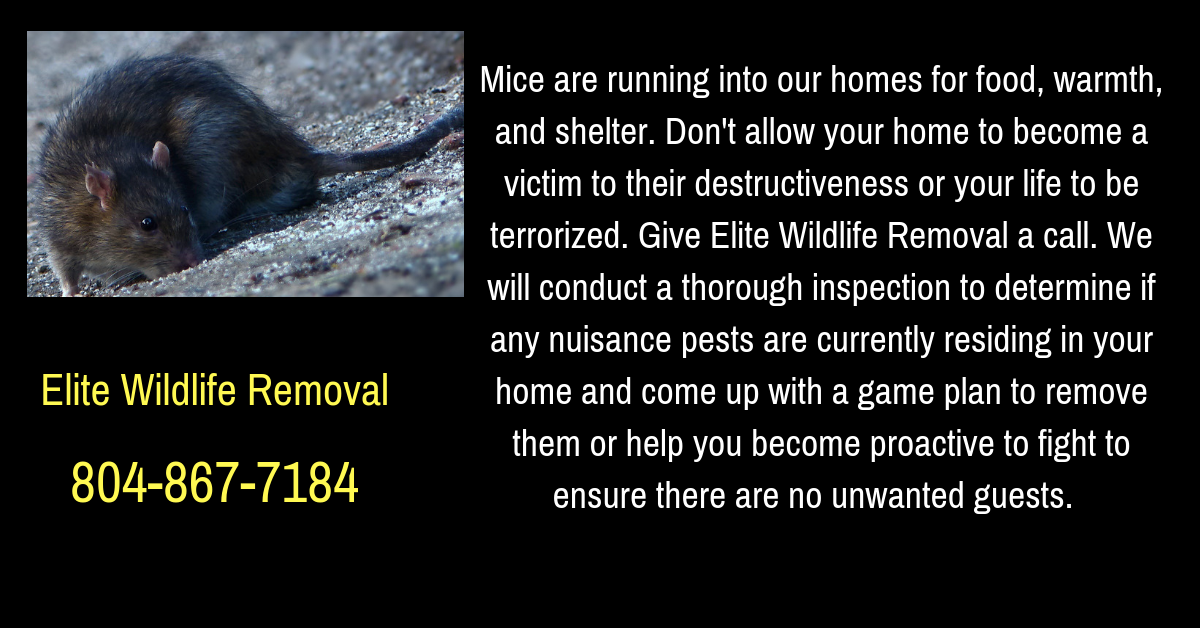 Visit Our Website At Www Eliteanimalsolutions Com For More Information About Wildlife Issues And Solutions Visit Our Blog At H Wildlife How To Remove Opossum