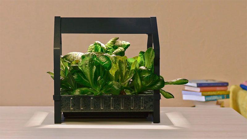 Ikea Indoor Garden Hydroponic Gardening Indoor Vegetable