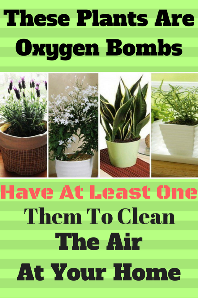 Plants we develop in our homes are in charge of more for Oxygen plants for home