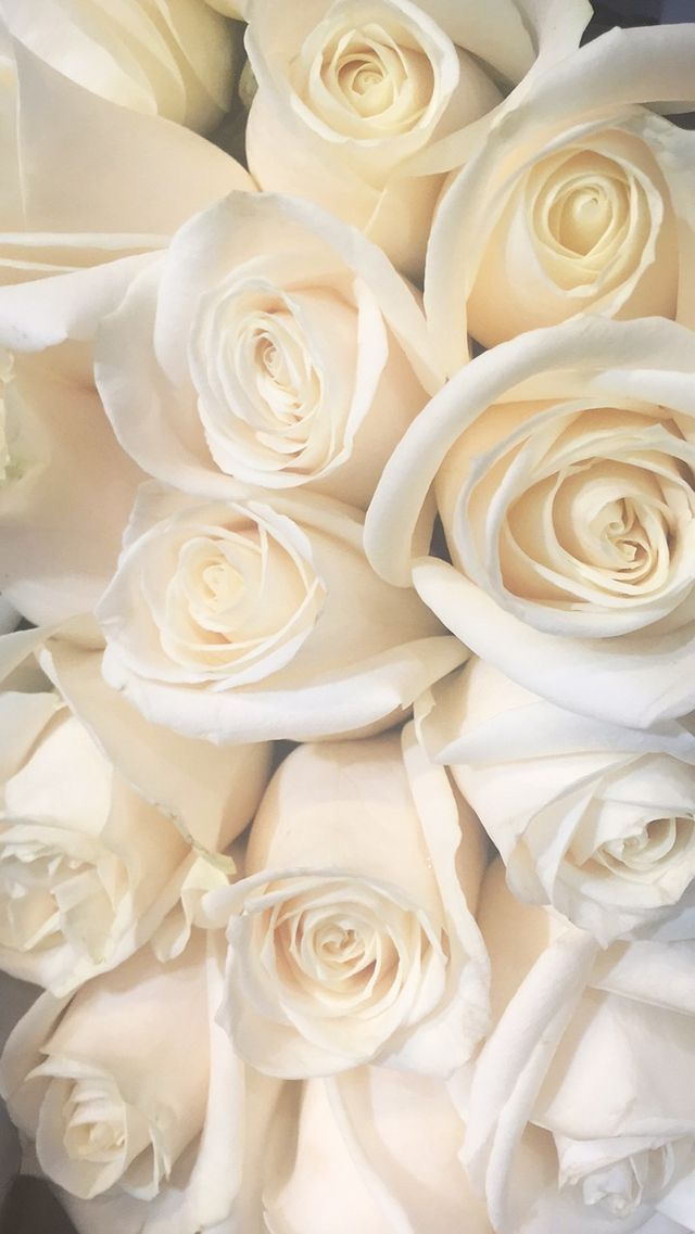 Pin By Lexi Rene On Flowers White Roses Wallpaper Flower Phone Wallpaper White Roses
