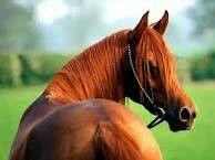 Que caballo tan bello