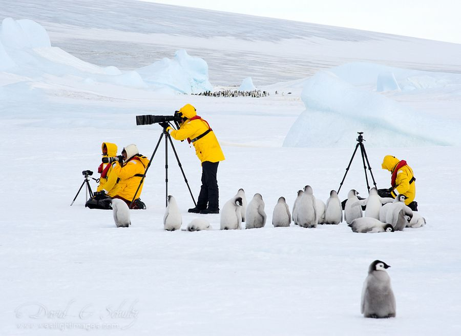 Antartic Photo Workshop...polar style by David C. Schultz - Here's a link to video I shot on this trip of the Emperor penguins if you're interested. http://youtu.be/rLcpYeiQ_DQ