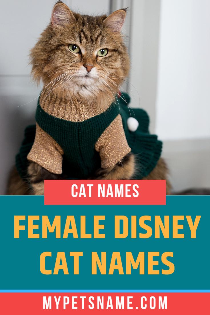 Female Disney Cat Names Disney Cat Names Disney Cats Cat Names