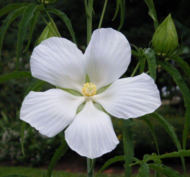 Entretien Hibiscus Et Plantes Florissantes Pour Le Jardin D
