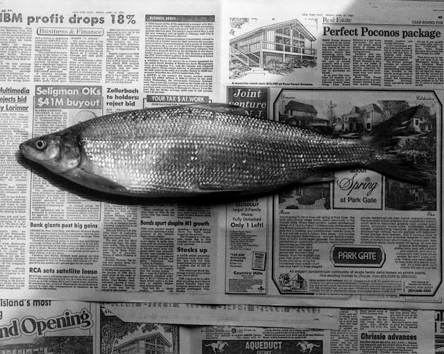 Robert Mapplethorpe - Fish,1985