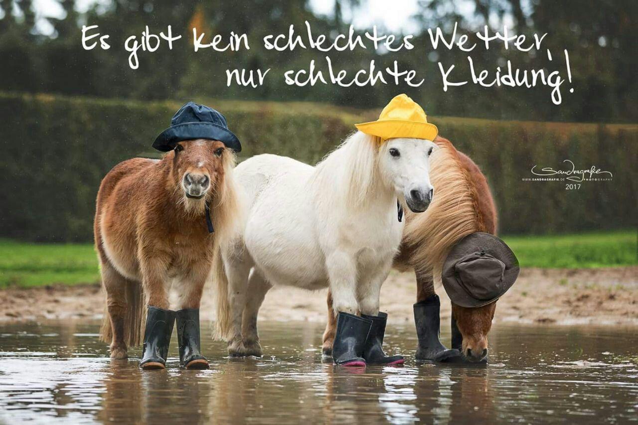 Pin von RC Handgemaak auf *Horses* | Lustige pferdebilder