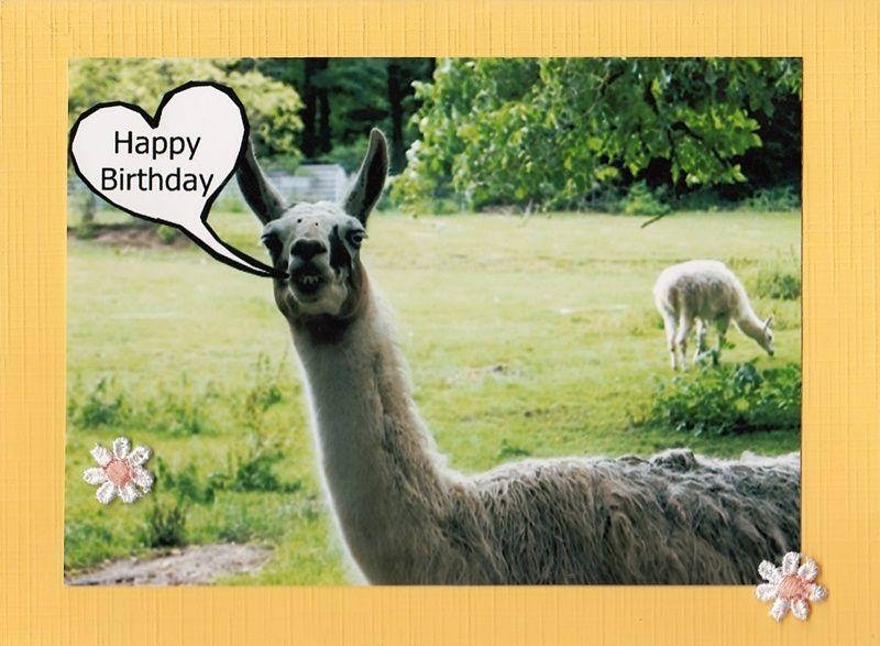 Geburtstagskarte für Tierfreunde mit Guanako aus dem Tierpark