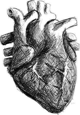 cuore umano disegno a matita | illustra | Pinterest | Corazón ...