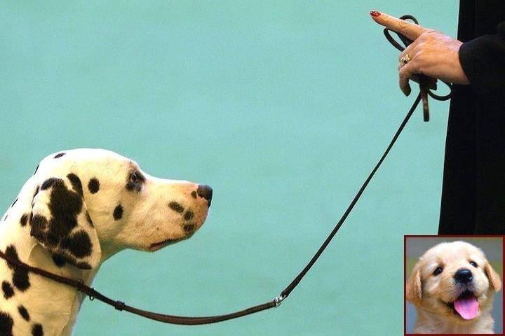 Dog behavior specialist salary and clicker training