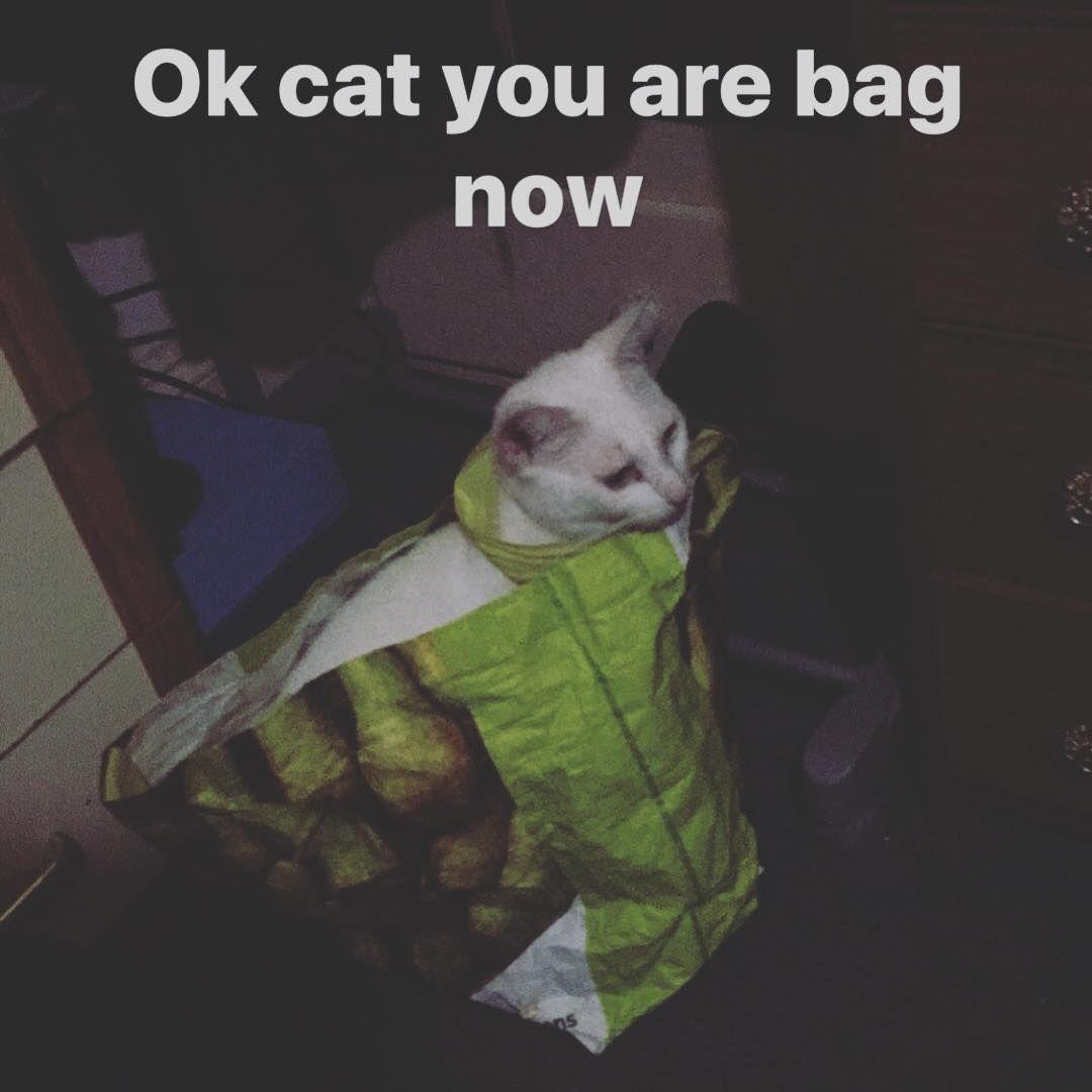 Kitty Cat Cats Kittens Kitten Cutecat Whitecat Funnycat Sillycat Lovecats Bestcats Silly Cats Cute Cats Funny Cats