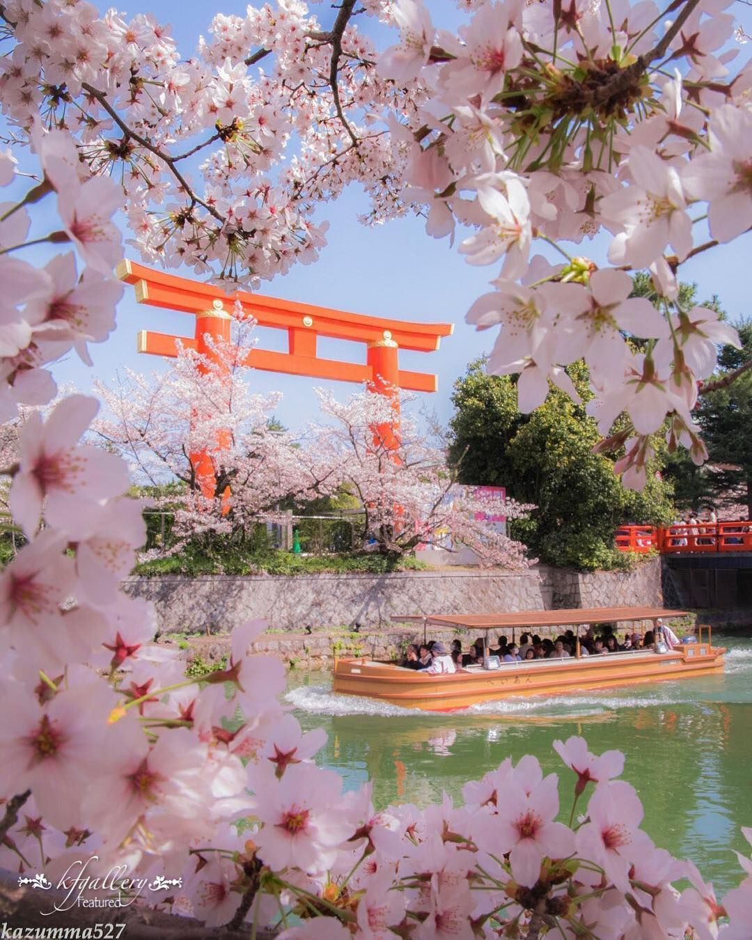 Tori I Gate Looking Over The Cherry Blossom In Japan Cherry Blossom Japan Japan Sakura Japan Photography