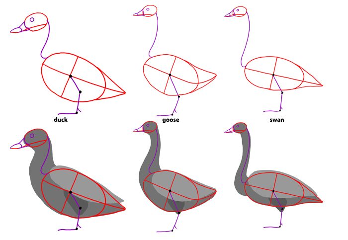 How To Draw Birds Step By Step Instructions With Anatomical Details