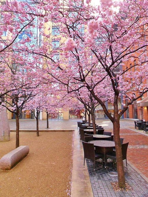 Outside Cafe Under Cherry Blossom Oozells Square Birmingham England Photo By Vwcampervan Aldridge Birmingham England Birmingham Uk Birmingham