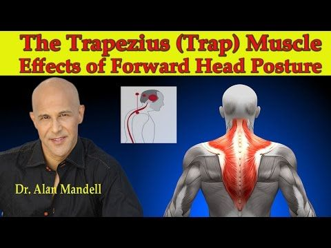 The Trapezius (Trap) Muscle...The Major Effects of Forward Head ...