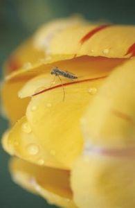 How to make a Garlic Spray Bug Barrier