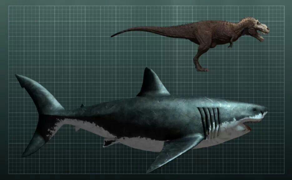 Megalodonte!!! ( Comparado Con T-Rex ) | Dinozauri | Pinterest ...