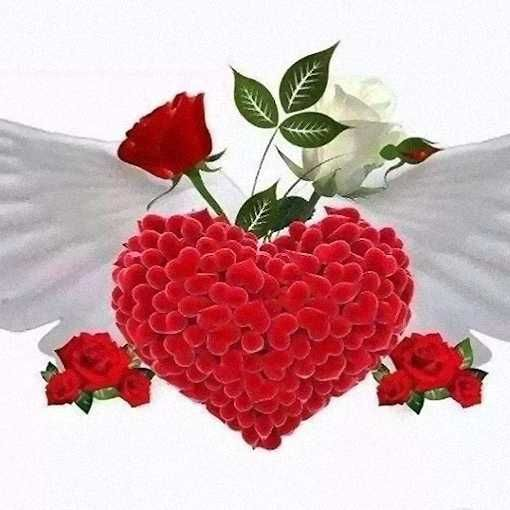 Flores Rosas Rojas Amores Flowers Rose Y Leaves