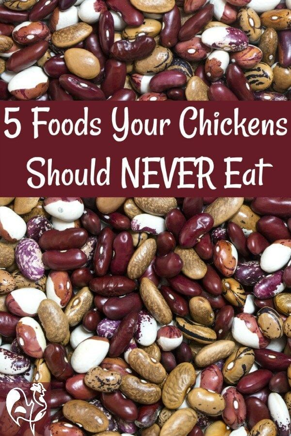 Did you know there are foods which can actually kill your ...
