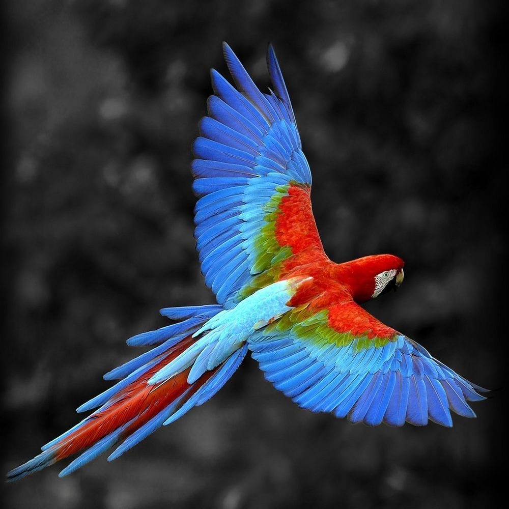 Color Feather Bird Parrot Fly Exotic Forest Handmade