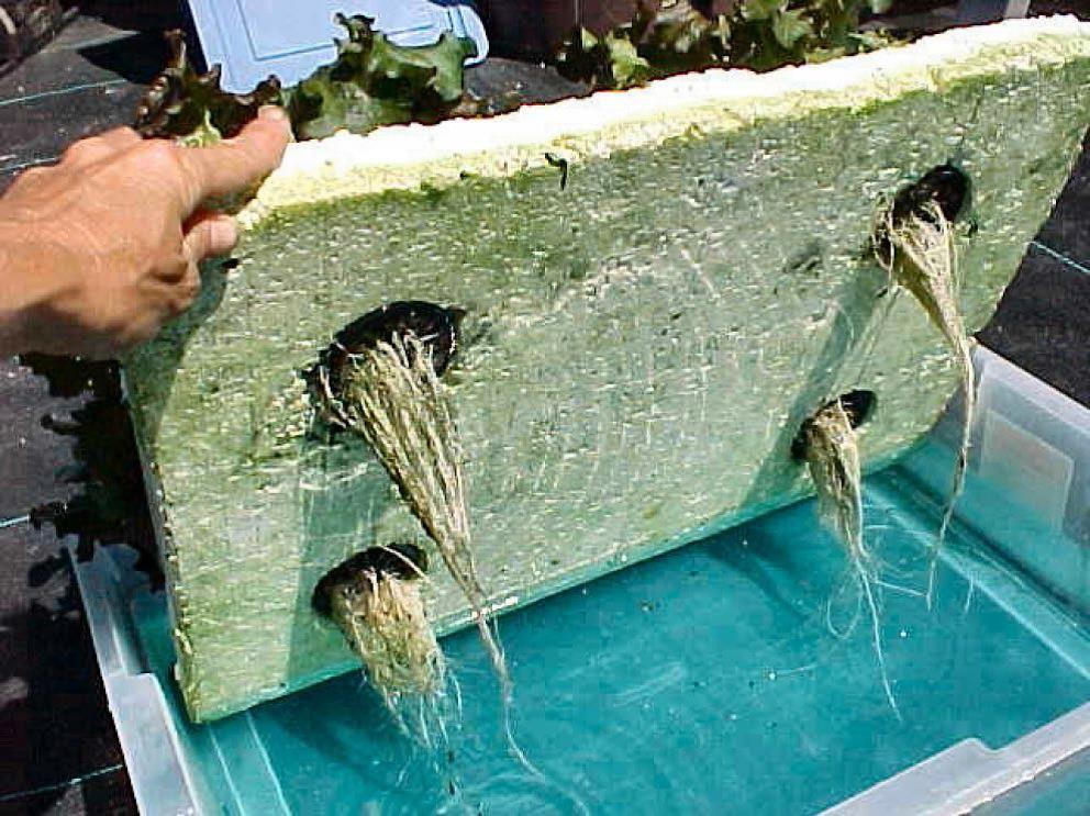 Easy Hydroponics for Beginners Hydroponic gardening