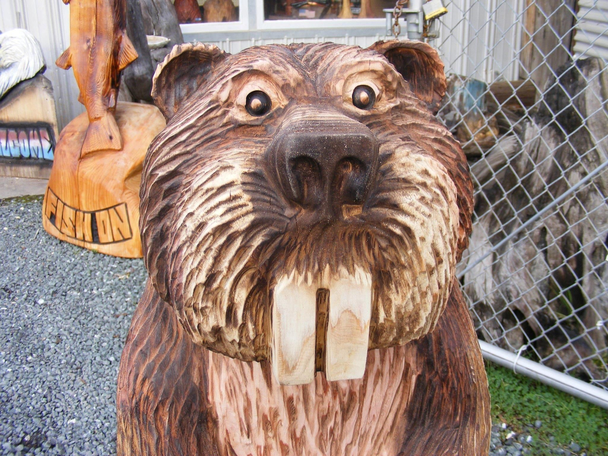 Mark colp captured this great expression on beaver