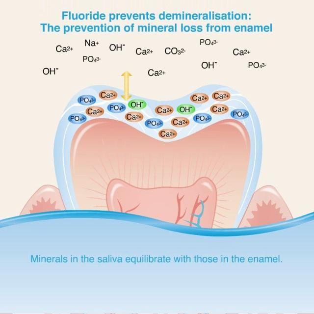Fluoride protects teeth | Dentistry, Healthy teeth, Pediatrics
