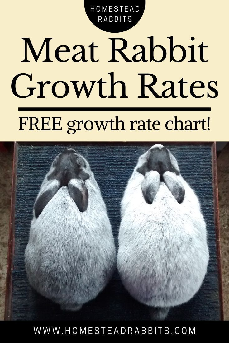 Commercial Meat Rabbit Growth Rates Homestead Rabbits In 2020 Meat Rabbits Raising Rabbits For Meat Raising Rabbits