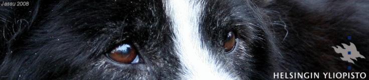 Miten koira kokee maailmamme? – Koirien kognitiotutkimusta Suomessa: www.koiranmieli.edublog.org