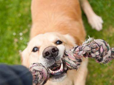 San Ramon Dog Parks Great Reviews Dogs Dog Walker Veterinary