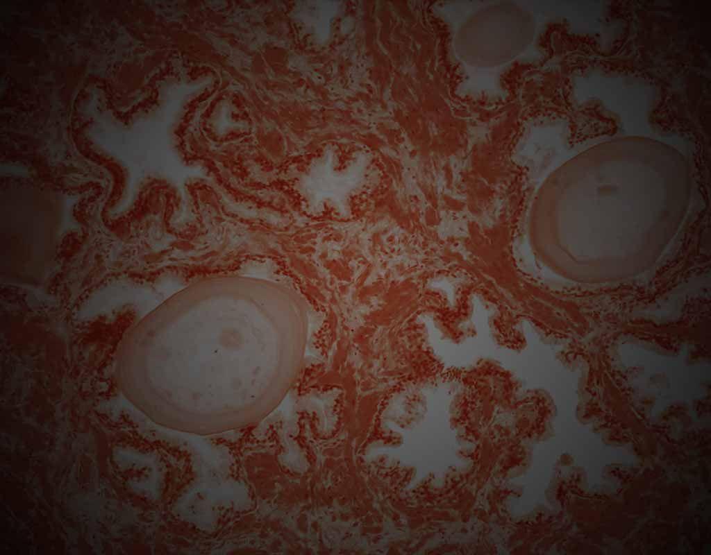 Anatomy & Physiology Revealed 3.0 | Geometría Sagrada | Pinterest ...