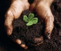 We don't credit the luck of the irish- The green is from the organic topsoil.