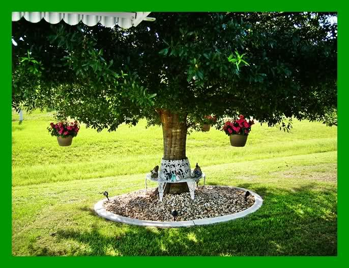 modren garden ideas under trees landscaping around a to - Flower Garden Ideas Around Tree