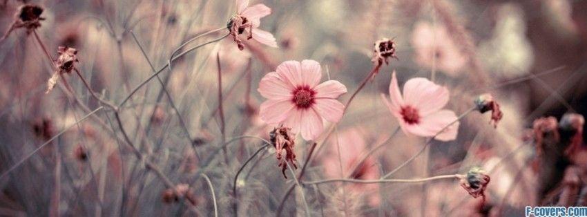 Vintage Flower Facebook Covers Flowers macro 14 facebook