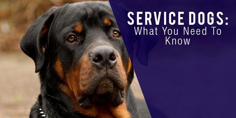 Diensthunde Was Sie Wissen Mussen Diensthunde Hunde Begleithund